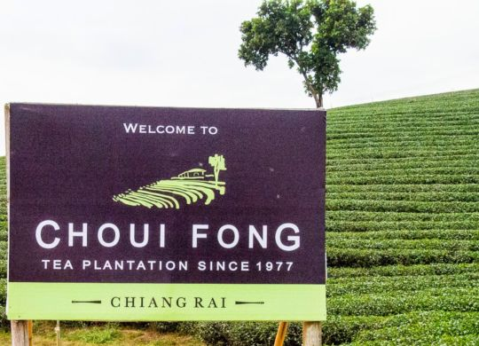 Choui_Fong_Tea_Plantation_20141229_8859